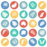 Ο τροπικός κύκλος βγάζει φύλλα τα εικονίδια που τίθενται στο υπόβαθρο κύκλων χρώματος για το γραφικό και σχέδιο Ιστού, σύγχρονο α απεικόνιση αποθεμάτων