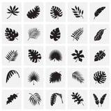 Ο τροπικός κύκλος βγάζει φύλλα τα εικονίδια που τίθενται στο υπόβαθρο τετραγώνων για το γραφικό και σχέδιο Ιστού, σύγχρονο απλό δ απεικόνιση αποθεμάτων
