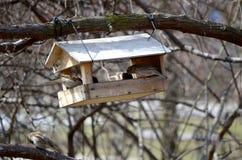 Ο τροφοδότης πουλιών στοκ φωτογραφία με δικαίωμα ελεύθερης χρήσης