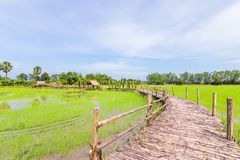 Ο τρόπος είναι ξύλινος στον πράσινο τομέα στη μεσημβρία στοκ εικόνα με δικαίωμα ελεύθερης χρήσης