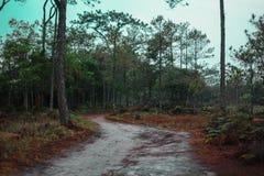 Ο τρόπος είναι στο δάσος για να είναι κατασκευή από τους ανθρώπους στοκ φωτογραφίες