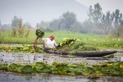 Ο τρόπος ζωής στη λίμνη DAL, τοπικοί άνθρωποι χρησιμοποιεί ` Shikara `, μια μικρή βάρκα Στοκ φωτογραφία με δικαίωμα ελεύθερης χρήσης