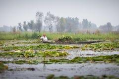 Ο τρόπος ζωής στη λίμνη DAL, τοπικοί άνθρωποι χρησιμοποιεί ` Shikara `, μια μικρή βάρκα Στοκ Φωτογραφίες