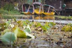 Ο τρόπος ζωής στη λίμνη DAL, τοπικοί άνθρωποι χρησιμοποιεί ` Shikara `, μια μικρή βάρκα Στοκ Φωτογραφία