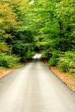Ο τρόπος στις πολύ όμορφες δασικές όψεις Στοκ Εικόνες