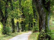 Ο τρόπος στο δάσος 1 Στοκ φωτογραφία με δικαίωμα ελεύθερης χρήσης