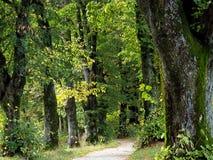 Ο τρόπος στο δάσος 2 Στοκ εικόνες με δικαίωμα ελεύθερης χρήσης