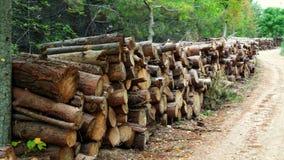 Ο τρόπος του ξύλου Στοκ εικόνα με δικαίωμα ελεύθερης χρήσης