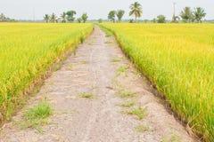Ο τρόπος χωρίς χάρτη στο αγρόκτημα ρυζιού Στοκ Εικόνες