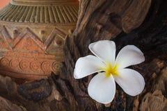 Ο τρύγος και η μπουτίκ φαίνονται plumeria λουλουδιών με τον παλαιό ψημένο άργιλο va Στοκ φωτογραφία με δικαίωμα ελεύθερης χρήσης