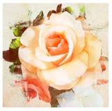 Ο τρύγος λουλουδιών, αυξήθηκε με το υπόβαθρο σύστασης εγγράφου Στοκ Εικόνες