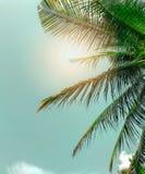 Ο τρύγος τόνισε το φοίνικα, θερινό δέντρο, αναδρομικός, δέντρο καρύδων με το διάστημα αντιγράφων στοκ εικόνες με δικαίωμα ελεύθερης χρήσης