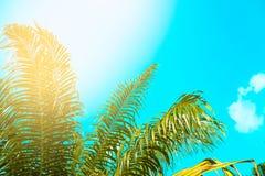 Ο τρύγος φοινίκων τόνισε, μόδα, ταξίδι, καλοκαίρι, διακοπές και τροπική παραλία Δημιουργικός φιαγμένος από πράσινα φύλλα δέντρων Στοκ Φωτογραφίες