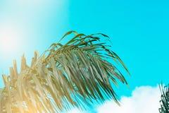 Ο τρύγος φοινίκων τόνισε, μόδα, ταξίδι, καλοκαίρι, διακοπές και τροπική παραλία Δημιουργικός φιαγμένος από πράσινα φύλλα δέντρων Στοκ φωτογραφία με δικαίωμα ελεύθερης χρήσης