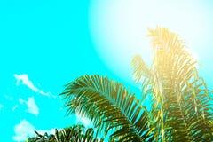 Ο τρύγος φοινίκων τόνισε, μόδα, ταξίδι, καλοκαίρι, διακοπές και τροπική παραλία Δημιουργικός φιαγμένος από πράσινα φύλλα δέντρων Στοκ Εικόνα