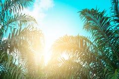 Ο τρύγος φοινίκων τόνισε, μόδα, ταξίδι, καλοκαίρι, διακοπές και τροπική παραλία Δημιουργικός φιαγμένος από πράσινα φύλλα δέντρων Στοκ εικόνα με δικαίωμα ελεύθερης χρήσης