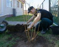 ο τύπος έβαλε το δέντρο Στοκ φωτογραφία με δικαίωμα ελεύθερης χρήσης