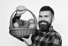 Ο τύπος κρατά ότι το homegrown άτομο συγκομιδών με τη γενειάδα κρατά το καλάθι φρούτων στοκ φωτογραφία με δικαίωμα ελεύθερης χρήσης