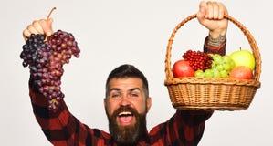 Ο τύπος με το άτομο συγκομιδών με τη γενειάδα κρατά το καλάθι με τα φρούτα στοκ εικόνα