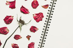 Ο Τύπος ξηρός αυξήθηκε πέταλα λουλουδιών, στη σελίδα βιβλίων σημειώσεων, με το διαστημικό, εκλεκτής ποιότητας τόνο αντιγράφων Στοκ φωτογραφία με δικαίωμα ελεύθερης χρήσης