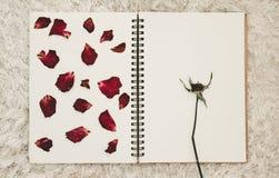 Ο Τύπος ξηρός αυξήθηκε πέταλα λουλουδιών στο λεύκωμα φωτογραφιών με το διάστημα αντιγράφων Στοκ Φωτογραφίες