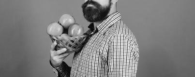 Ο τύπος παρουσιάζει στο homegrown άτομο συγκομιδών με τη γενειάδα κρατά το κύπελλο φρούτων στοκ εικόνα με δικαίωμα ελεύθερης χρήσης