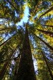 Ολυμπιακό εθνικό πάρκο, πολιτεία της Washington Στοκ εικόνα με δικαίωμα ελεύθερης χρήσης