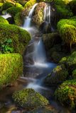 Ολυμπιακό εθνικό πάρκο, πολιτεία της Washington στοκ φωτογραφία