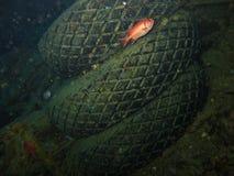 Ο υποβρύχιος κόσμος στα βαθιά νερά στην κοραλλιογενή ύφαλο και τις εγκαταστάσεις ανθίζει τη χλωρίδα στην μπλε παγκόσμια θαλάσσια  στοκ φωτογραφίες με δικαίωμα ελεύθερης χρήσης