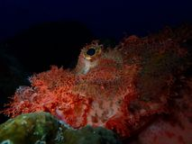 Ο υποβρύχιος κόσμος στα βαθιά νερά στην κοραλλιογενή ύφαλο και τις εγκαταστάσεις ανθίζει τη χλωρίδα στην μπλε παγκόσμια θαλάσσια  στοκ εικόνες