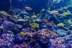 Ο υποβρύχιος κόσμος της τροπικής θάλασσας Υπόβαθρο στοκ εικόνες