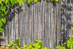 Ο υλικός τοίχος μπαμπού που πλαισιώνεται με πράσινο βγάζει φύλλα Στοκ Εικόνα