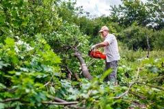 Ο υλοτόμος χρησιμοποιεί το αλυσιδοπρίονό του έκοψε το δέντρο Στοκ Εικόνες