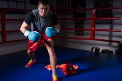 Ο φίλαθλος αρσενικός μπόξερ στα εγκιβωτίζοντας γάντια αυξάνεται και προετοιμάζεται για τη μάχη Στοκ εικόνα με δικαίωμα ελεύθερης χρήσης