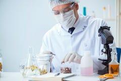 Ο φαρμακοποιός που αναμιγνύει τα αρώματα στο εργαστήριο Στοκ Εικόνες