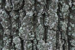 Ο φλοιός ενός δέντρου Στοκ φωτογραφίες με δικαίωμα ελεύθερης χρήσης