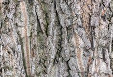 Ο φλοιός ενός παλαιού δέντρου Ο φλοιός των παλαιών ιτιών στοκ φωτογραφίες