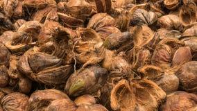 Ο φλοιός κοΐρ καρύδων συσσώρευσε, το οποίο έχει ξεφλουδιστεί μακριά ή έχει αποφλοιωθεί από την καρύδα κλείστε αυξημένος του φλοιο στοκ φωτογραφία
