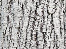Ο φλοιός του ξύλου ασπρίζεται με τον ασβέστη Προστασία του δέντρου από τα έντομα, προσοχή κήπων, χρόνος άνοιξη στοκ φωτογραφίες με δικαίωμα ελεύθερης χρήσης