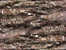 Ο φλοιός του παλαιού δέντρου 3746 Βάναυση βαθιά σύσταση Γκρίζος σκληρός τόνος στοκ εικόνες