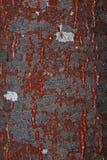 ο φλοιός Στοκ εικόνα με δικαίωμα ελεύθερης χρήσης