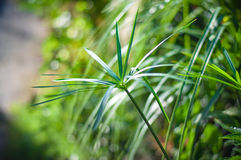 Ο φρέσκος εγχώριος κήπος μας Στοκ εικόνες με δικαίωμα ελεύθερης χρήσης