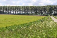 Ο φρέσκος πράσινος τομέας με την ηλιοφάνεια συγκομιδών την άνοιξη Στοκ Εικόνες