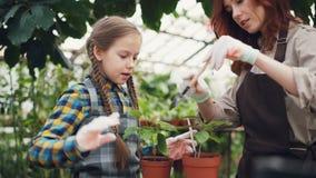 Ο φροντίζοντας επαγγελματικός κηπουρός μητέρων διδάσκει την κόρη της για να σκάψει με σκαπάνη το χώμα στο δοχείο εγκαταστάσεων με απόθεμα βίντεο