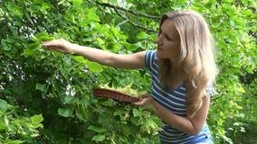 Ο φυσικός σπουδαστής ιατρικής συλλέγει ότι φρέσκος το άνθος στο καλάθι 4K φιλμ μικρού μήκους