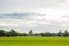 Ο φυσικός ταϊλανδικός τομέας ρυζιού με την καλύβα των famer κάτω από το δέντρο καρύδων, κοιτάζει από τη γωνία της θέας Στοκ φωτογραφία με δικαίωμα ελεύθερης χρήσης