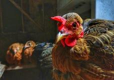 Ο φύλακας της φωλιάς στοκ φωτογραφία με δικαίωμα ελεύθερης χρήσης