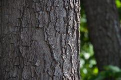 Ο φλοιός στο μέγεθος δέντρων Στοκ Εικόνες
