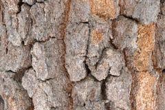 Ο φλοιός της παλαιάς σημύδας Στοκ φωτογραφία με δικαίωμα ελεύθερης χρήσης