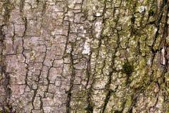 Ο φλοιός του παλαιού δέντρου Υπόβαθρο Στοκ Φωτογραφία
